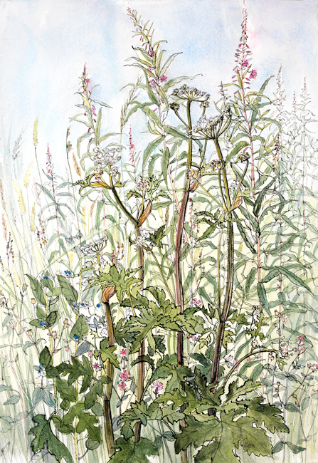 Cow Parsley and Rosebay Willow Herb
