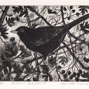 Autumn Blackbird